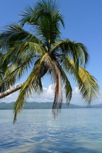 Palm Tree Over Costa Rica's Caribe